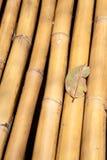 Blatt auf gelbem Bambus Stockbilder