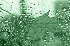 Blatt auf grünem Glas stockbilder