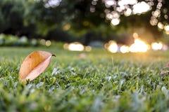 Blatt auf Gras Stockfotos