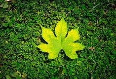 Blatt auf Grashintergrundbeschaffenheit lizenzfreie stockfotografie