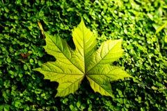 Blatt auf Grashintergrundbeschaffenheit Stockbild