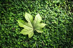 Blatt auf Grashintergrundbeschaffenheit Stockfotos