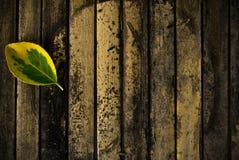 Blatt auf Holz Stockbild