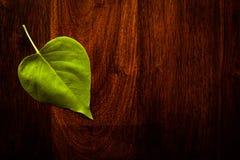 Blatt auf Holz Lizenzfreies Stockbild