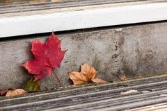 Blatt auf Treppe Stockfotos