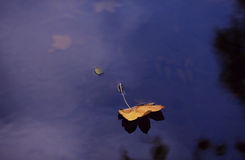 Blatt auf Wasser Stockfotos