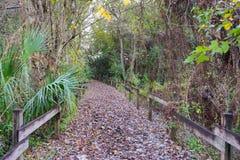 Blatt bedeckte Straße im Wald Stockfotografie