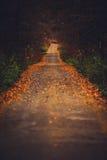 Blatt bedeckte Straße in Wald Stockfotos