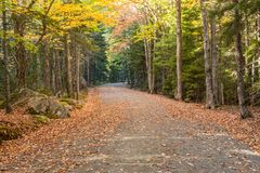 Blatt bedeckte Wagen-Straße im Acadia Lizenzfreie Stockbilder