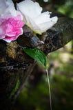 Blatt-Brunnen Stockfotografie