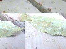 Blatt, das auf Holz stillsteht lizenzfreie stockfotos