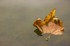 Blatt, das auf Wasser schwimmt Lizenzfreie Stockbilder