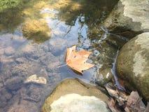 Blatt, das in Flusswasser durch die Felsen schwimmt Stockfotografie