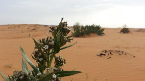 Blatt in der Wüste lizenzfreies stockfoto