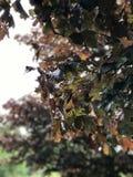 Blatt des Tones zwei Farbam Frühlings- oder Sommertag Lizenzfreies Stockfoto