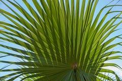 Blatt einer Palme Stockfoto