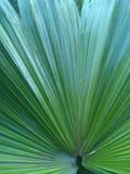 Blatt einer wild wachsenden Pflanze Stockbild