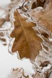 Blatt eingehüllt im Eis lizenzfreies stockfoto