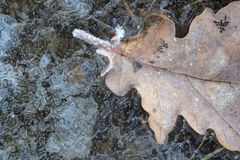 Blatt eingeschlossen im Eis stockfotografie