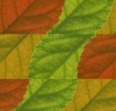 Blatt-Farbenhintergrund lizenzfreie stockfotos