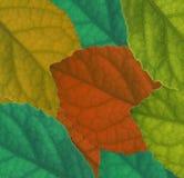 Blatt-Farbenhintergrund stockfotos