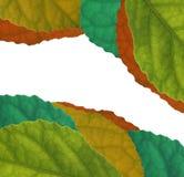 Blatt-Farbenisolathintergrund stockfotografie