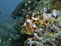 Blatt-Fische Stockbild
