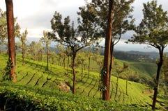Blatt-grünes Garten-Muster (Meer Lizenzfreie Stockfotografie