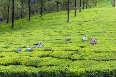 Blatt-grünes Garten-Muster (Meer Lizenzfreie Stockfotos