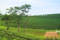 Blatt-grünes Garten-Muster (Meer Stockfoto
