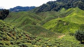 Blatt-grünes Garten-Muster (Meer Stockfotografie