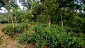 Blatt-grünes Garten-Muster (Meer Stockbilder