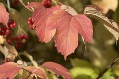 Blatt in Herbst 1 Stockfotografie