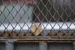 Blatt hinter Gittern Stockbilder