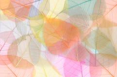 Blatt-Hintergrund-Blatt-Hintergrund lizenzfreie stockfotos