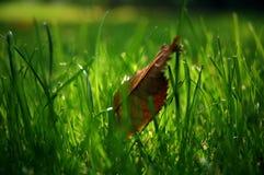 Blatt im Gras Stockfotos