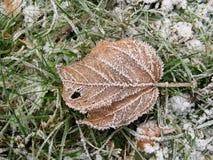 Blatt im Gras mit Morgenfrost stockfoto