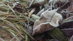 Blatt. Im Herbst stock images