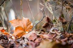 Blatt im Herbst/im Fall mit Niederlassungen in der Natur Stockbilder