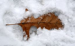 Blatt im Schnee Stockfotos