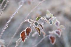 Blatt im tiefen Winterfrost Stockbilder