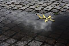 Blatt im Wasser lizenzfreie stockfotografie