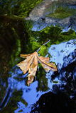 Blatt im Wasser Stockfotografie