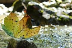 Blatt im Wasser lizenzfreie stockfotos