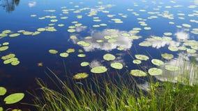 Blatt-Lilien schwimmen auf See-Oberflächen, in denen Himmel reflektieren Sie und bewölken 4K stock video