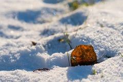Blatt mit Adern und Gras im Schnee Lizenzfreie Stockfotos