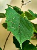 Blatt mit Wasser besprüht HDR pic KEIN Copyright Stockfotografie