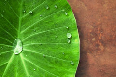 Blatt mit Wassertropfen Stockbild