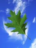 Blatt mit Wassertropfen auf Himmelhintergrund Lizenzfreies Stockfoto