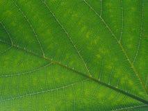 Blatt-Muster Stockfoto